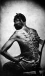 Studier i Anatomi & Utseende: Yakane – Kroppens tunnaskal
