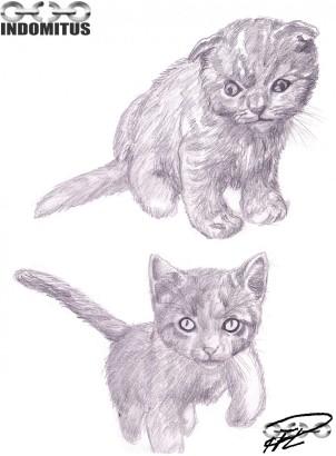 Fler kattungeskisser, 110215