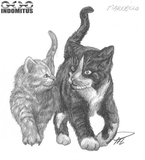 Svart Katt, Grå katt för Marcello